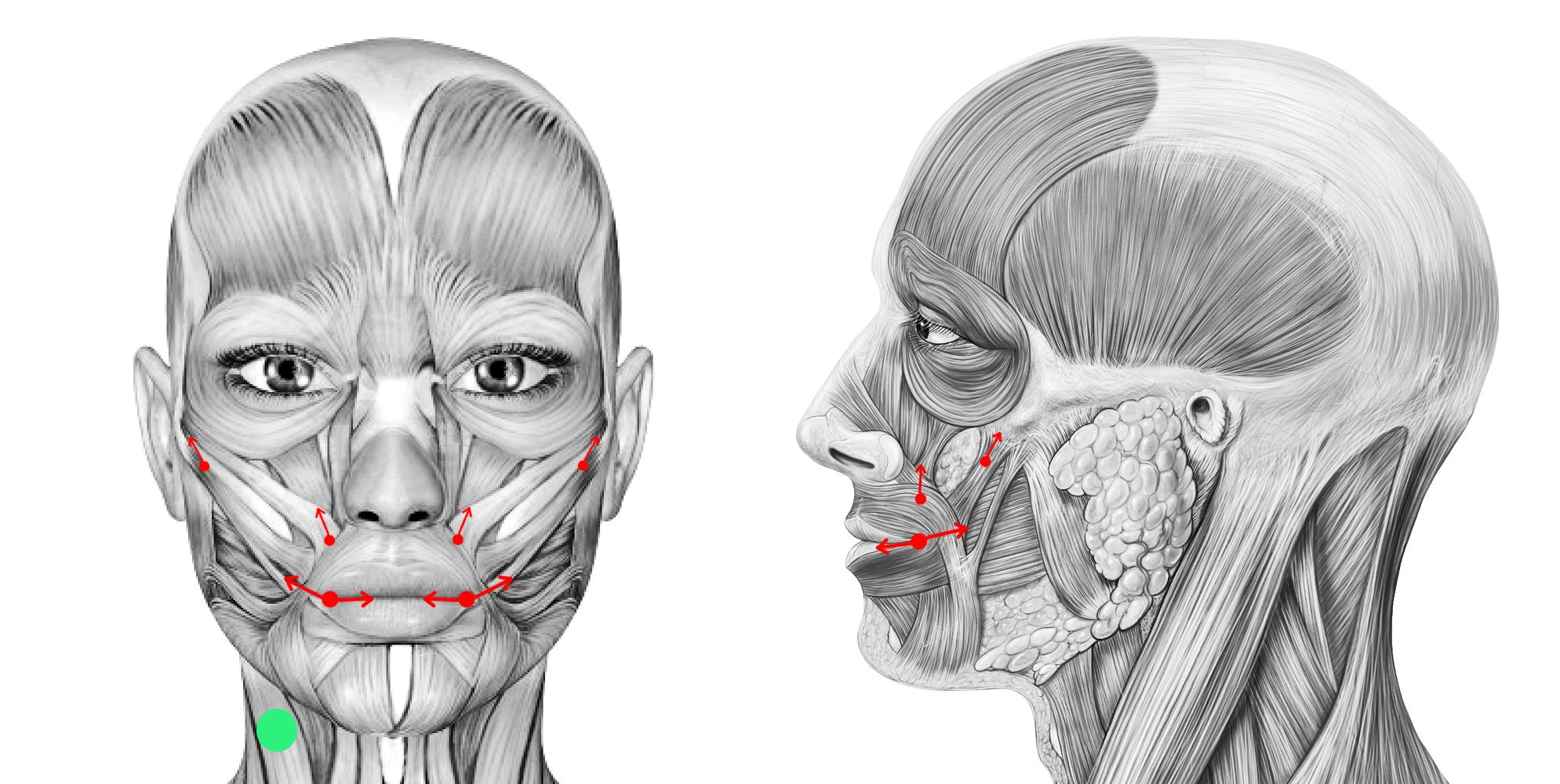 Facial muscles diagram, cote de pablo nudepics